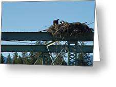 Osprey Nest With Mom And Chicks Greeting Card