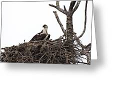 Osprey On A Nest In The Everglades Greeting Card