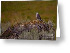 Osprey On A Rock   #7626 Greeting Card