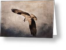Osprey Over The Columbia River Greeting Card