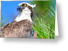 Osprey Profile Greeting Card