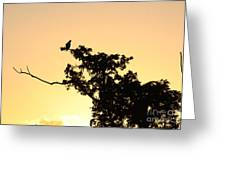 Osprey Sunset Greeting Card