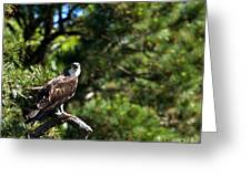 Osprey Talk Greeting Card