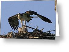 Osprey Warning Greeting Card