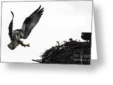 Osprey With Sushi Greeting Card