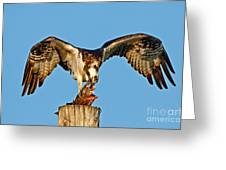 Osprey With Spotted Bass Greeting Card
