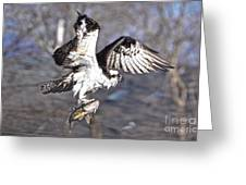 Osprey With Walleye Fish Greeting Card