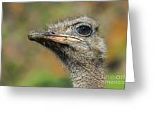 Ostrich 4 Greeting Card