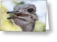 Ostrich Bokeh V2 Greeting Card