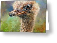 Ostrich Greeting Card