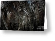 Ostrich Feather Texture Greeting Card