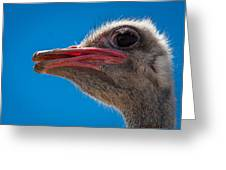 Ostrich Profile Greeting Card