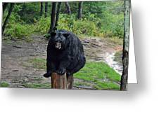 Oswald's Bear Greeting Card