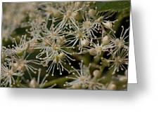 Otherworldly Flowers  Greeting Card