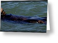 Otter 3 Greeting Card