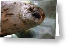 Otter Be Lookin' At You Kid Greeting Card