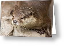 Otter Closeup Greeting Card