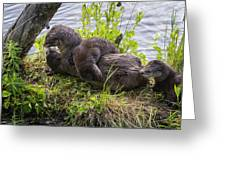Otter Family Fun Greeting Card