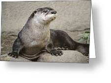 Otter North American  Greeting Card