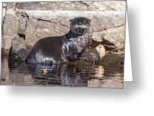 Otter Posing Greeting Card