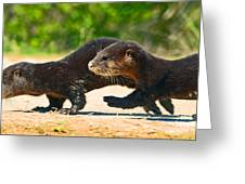 Otters Crossing The Road  Greeting Card