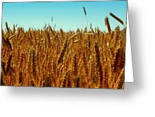 Our Daily Bread Greeting Card