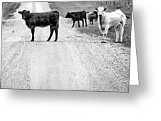 Our Way Or The Highway Bw Greeting Card
