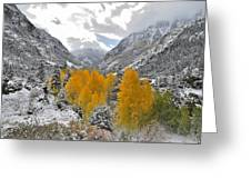 Ouray Fall Colors Greeting Card