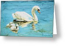 Out For A Morning Swim Greeting Card