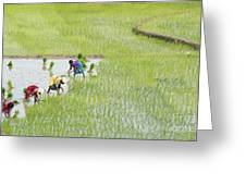 Out In The Fields Greeting Card