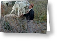 Out Of Africa  Friendly Wolves Greeting Card