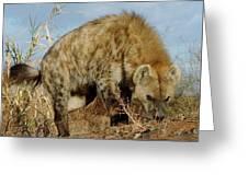 Out Of Africa Hyena 1 Greeting Card