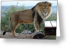 Out Of Africa  Lion 1 Greeting Card