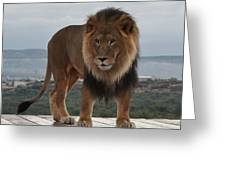 Out Of Africa Lion 3 Greeting Card