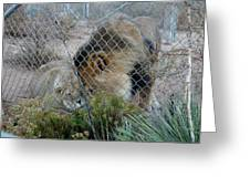 Out Of Africa Lions 4 Greeting Card