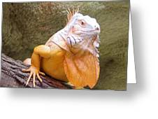 Out Of Africa Orange Lizard 1 Greeting Card