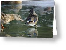 Out Of My Roosting Ice Spot Shorty Greeting Card