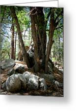 Out Of The Boulders Greeting Card