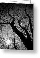 Out Of The Darkness Comes Light Greeting Card