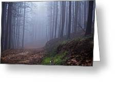 Out Of The Mist - Casper Mountain - Casper Wyoming Greeting Card