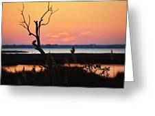 Ocean City Sunset Out On A Limb Greeting Card