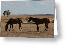 Outback Horses Greeting Card