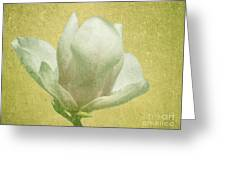 Outer Magnolia Greeting Card