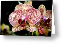 Outstanding Orchid Greeting Card