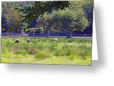 Over In The Meadow Greeting Card