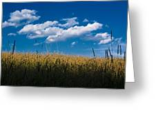 Over The Grass Greeting Card