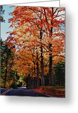 Over The Hill And Through The Trees Greeting Card