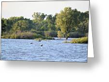 Over The Marsh Greeting Card