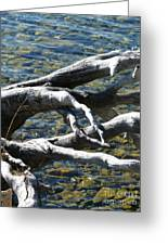 Over The Water Greeting Card