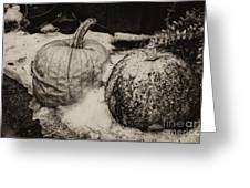 Overdue Fall Feast Remains Greeting Card